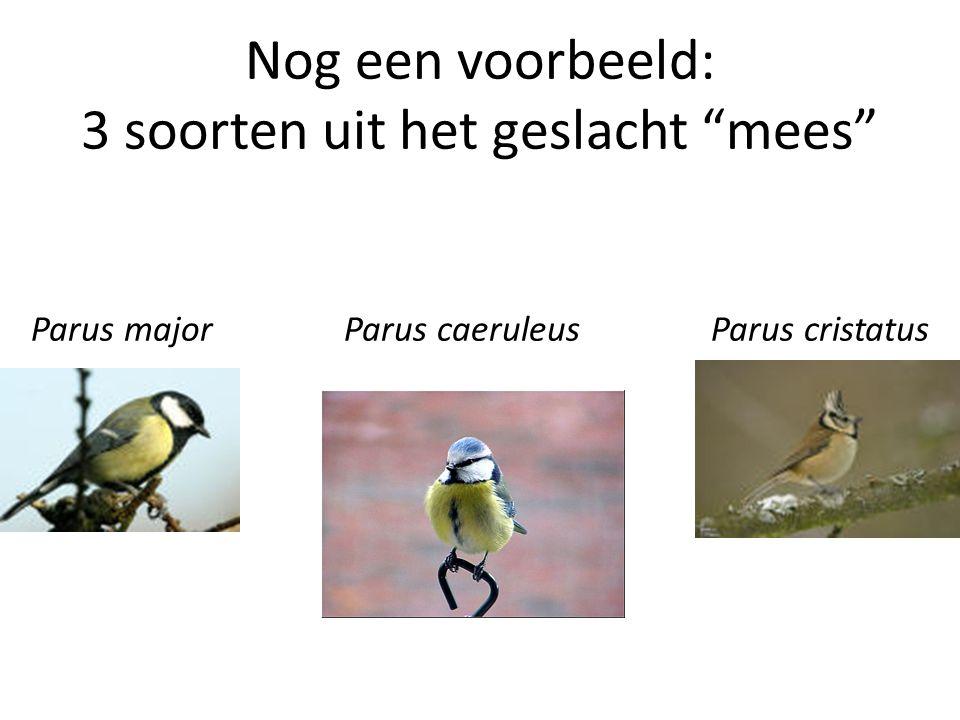 Nog een voorbeeld: 3 soorten uit het geslacht mees Parus major