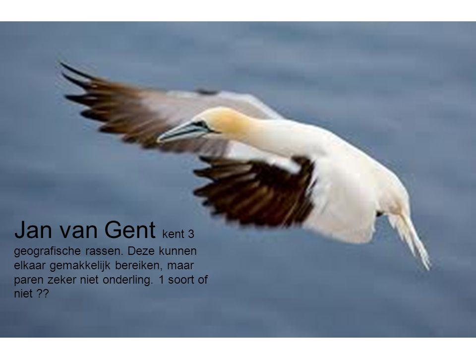 Jan van Gent kent 3 geografische rassen
