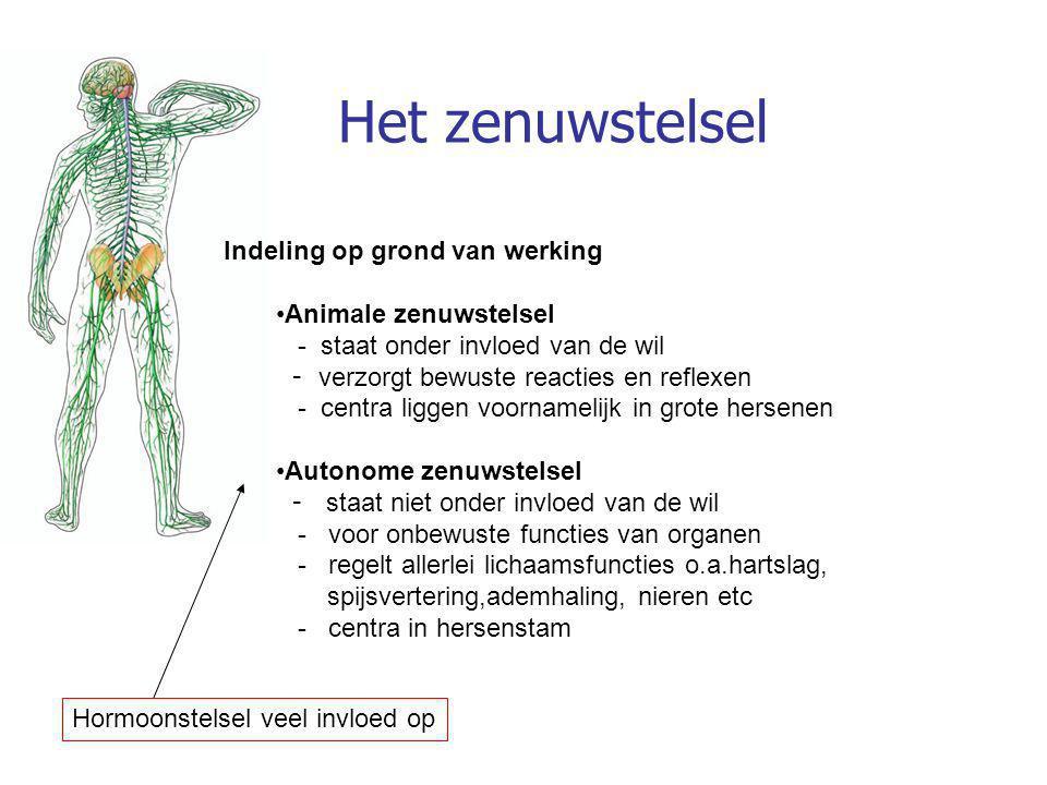 Het zenuwstelsel Indeling op grond van werking