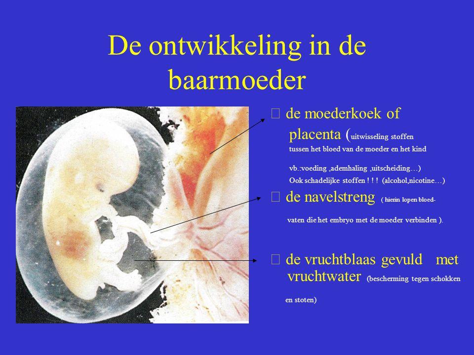 De ontwikkeling in de baarmoeder