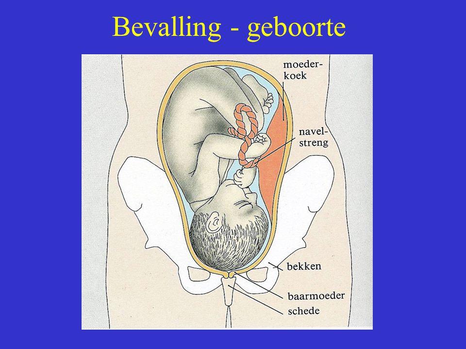 Bevalling - geboorte