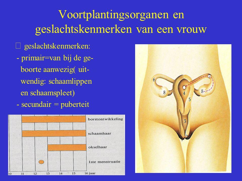 Voortplantingsorganen en geslachtskenmerken van een vrouw