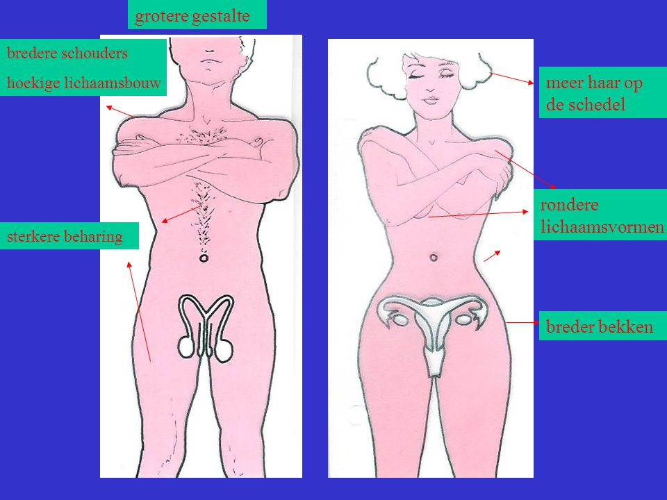 rondere lichaamsvormen