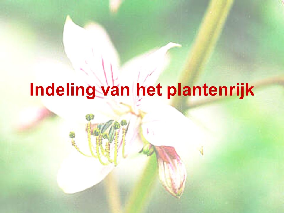 Indeling van het plantenrijk