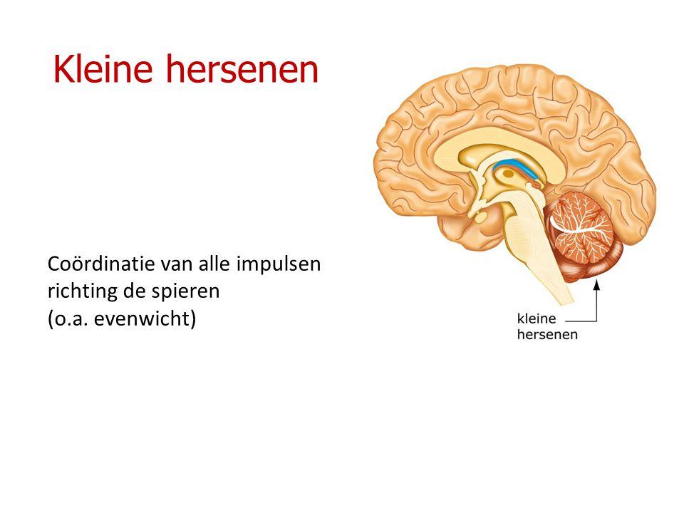 Kleine hersenen Coördinatie van alle impulsen richting de spieren
