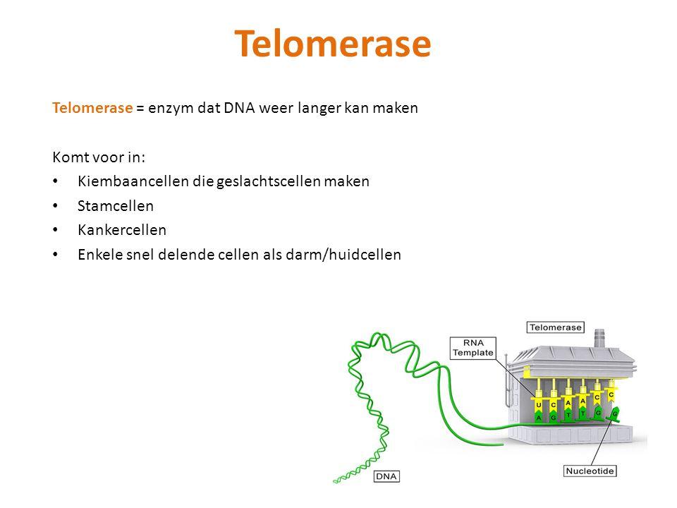 Telomerase Telomerase = enzym dat DNA weer langer kan maken