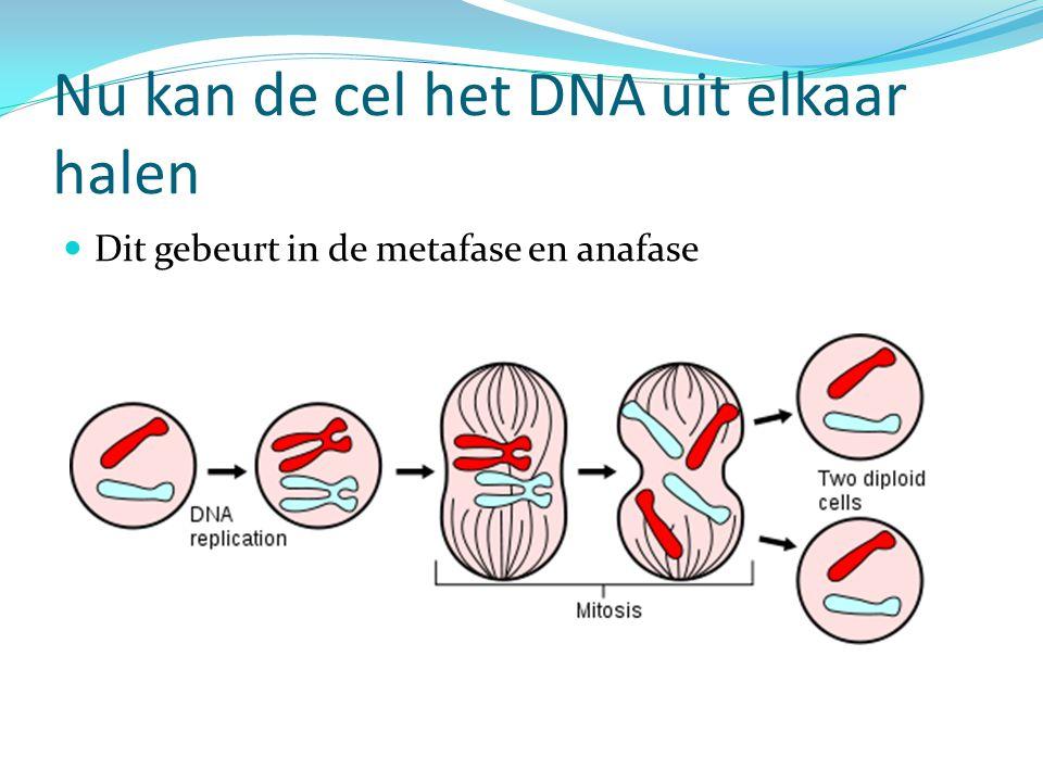 Nu kan de cel het DNA uit elkaar halen