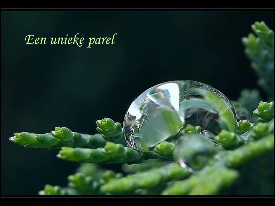 Een unieke parel