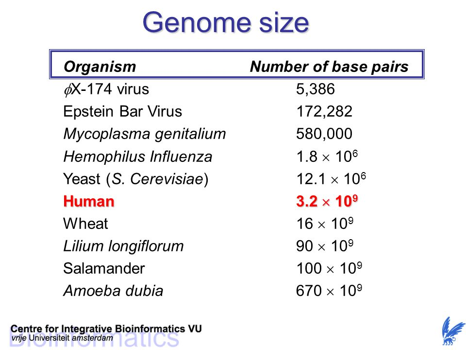 Genome size Organism Number of base pairs X-174 virus 5,386