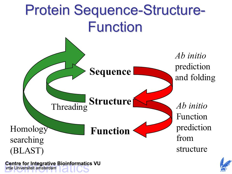 Protein Sequence-Structure-Function