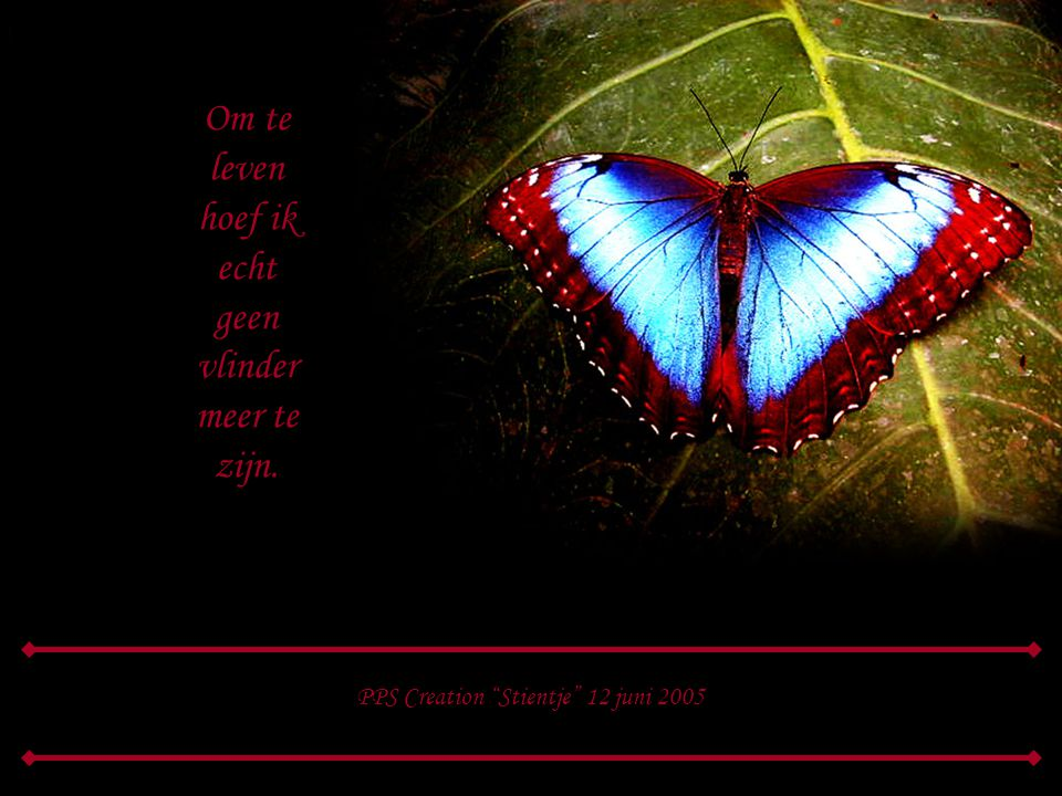 echt geen vlinder meer te zijn.
