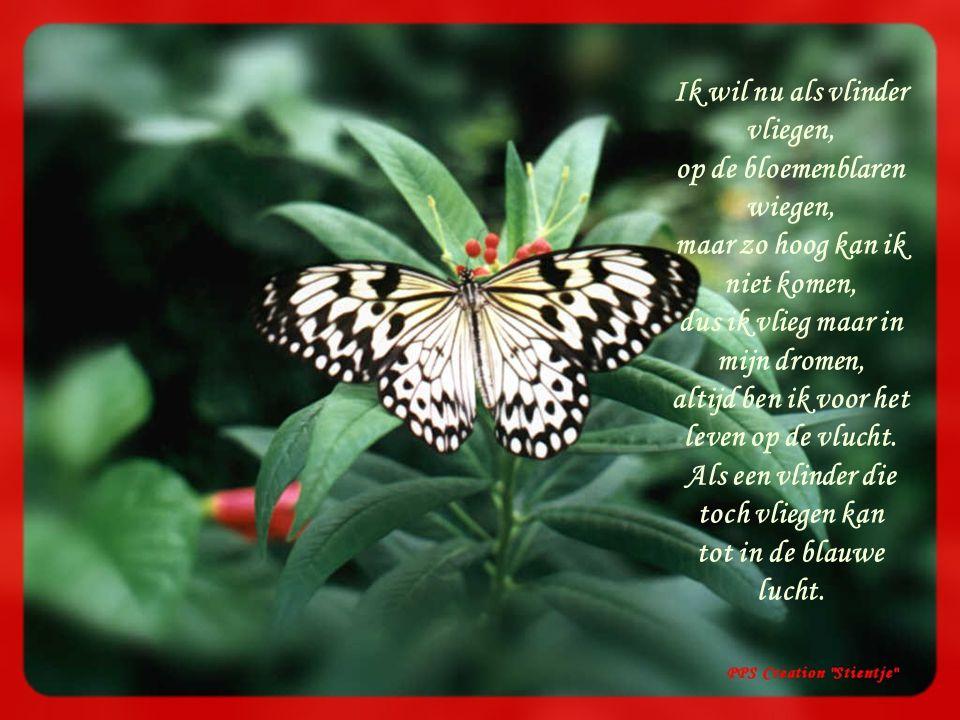 Ik wil nu als vlinder vliegen, op de bloemenblaren wiegen,