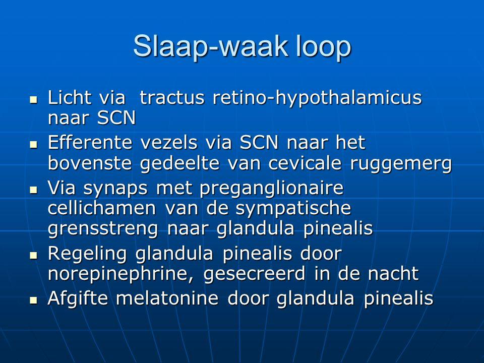 Slaap-waak loop Licht via tractus retino-hypothalamicus naar SCN