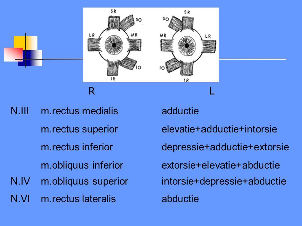 N.III m.rectus medialis adductie