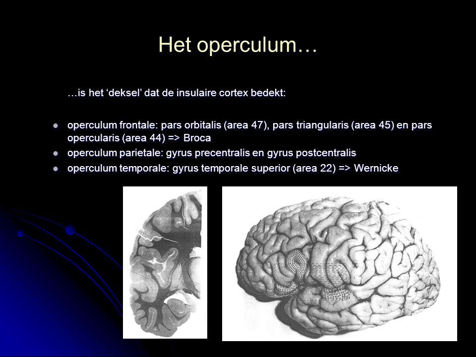 Het operculum… …is het 'deksel' dat de insulaire cortex bedekt: