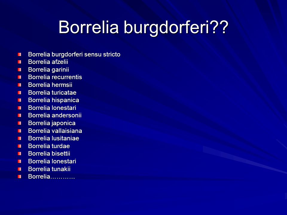 Borrelia burgdorferi Borrelia burgdorferi sensu stricto