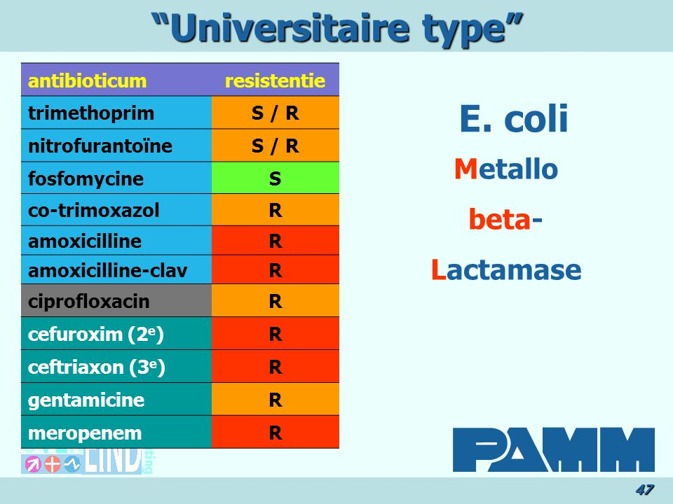 Universitaire type E. coli