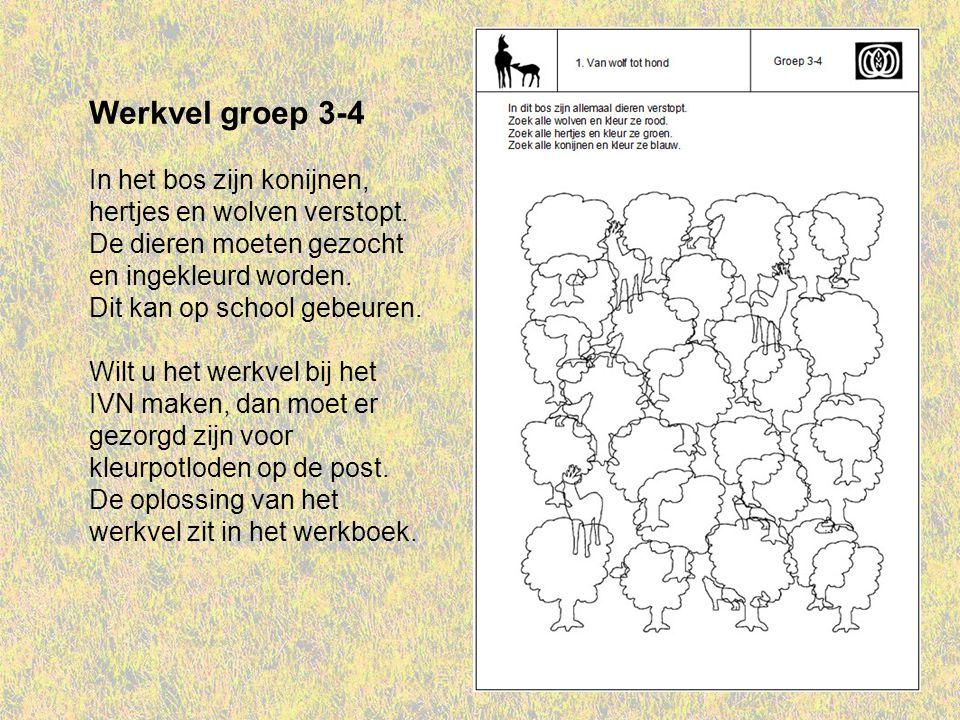 Werkvel groep 3-4