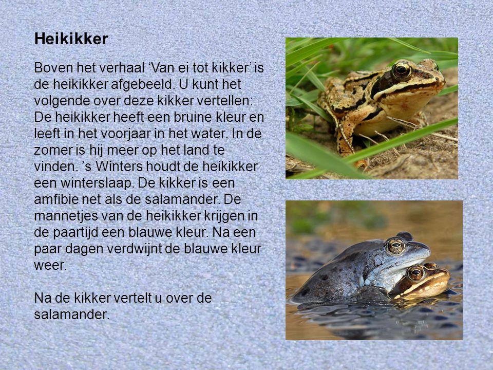 Heikikker Boven het verhaal 'Van ei tot kikker' is de heikikker afgebeeld. U kunt het volgende over deze kikker vertellen: