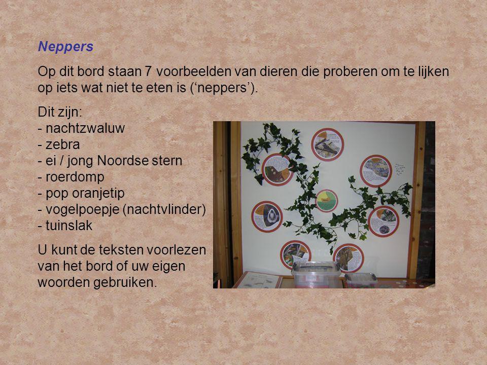 Neppers Op dit bord staan 7 voorbeelden van dieren die proberen om te lijken op iets wat niet te eten is ('neppers').
