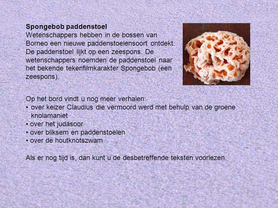 Spongebob paddenstoel