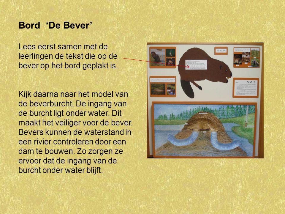 Bord 'De Bever' Lees eerst samen met de leerlingen de tekst die op de bever op het bord geplakt is.