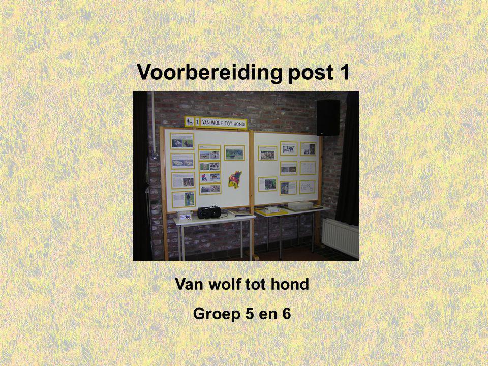 Voorbereiding post 1 Van wolf tot hond Groep 5 en 6