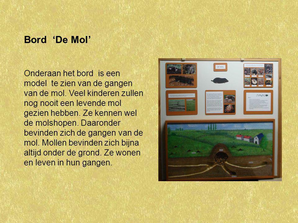 Bord 'De Mol'