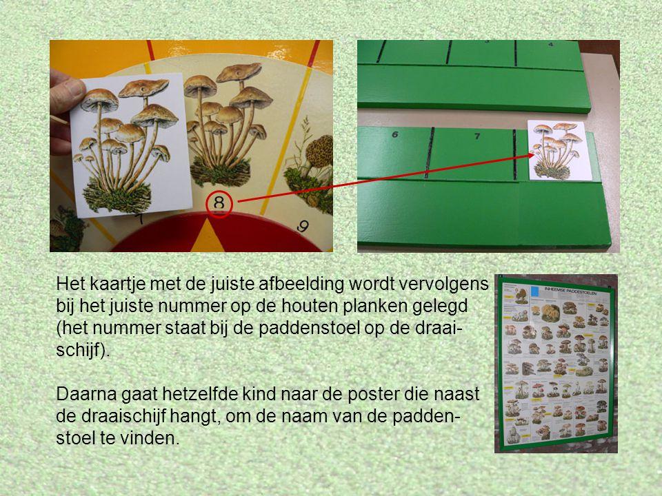 Het kaartje met de juiste afbeelding wordt vervolgens bij het juiste nummer op de houten planken gelegd (het nummer staat bij de paddenstoel op de draai- schijf).