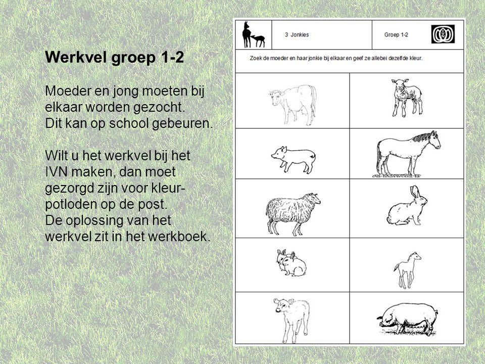 Werkvel groep 1-2