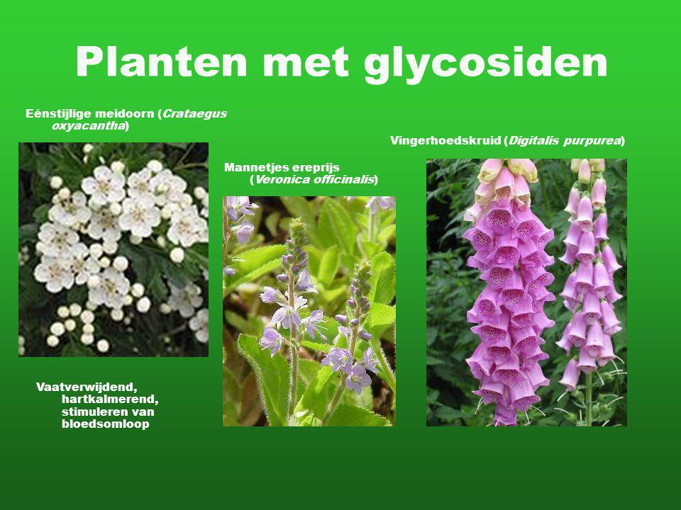 Planten met glycosiden