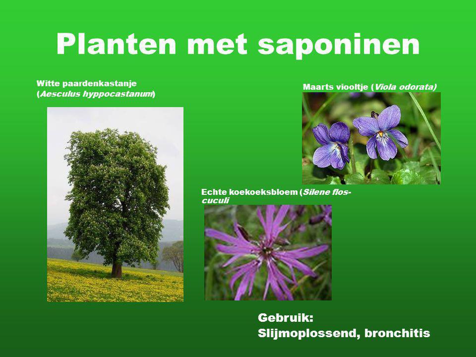 Planten met saponinen Gebruik: Slijmoplossend, bronchitis