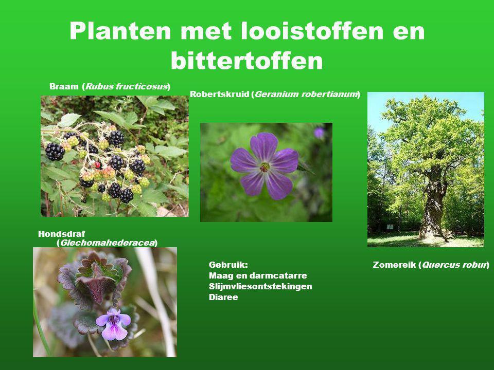 Planten met looistoffen en bittertoffen