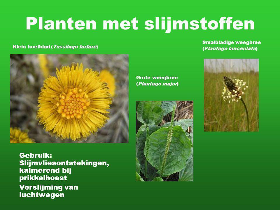 Planten met slijmstoffen