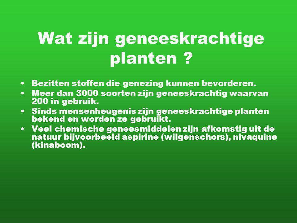 Wat zijn geneeskrachtige planten