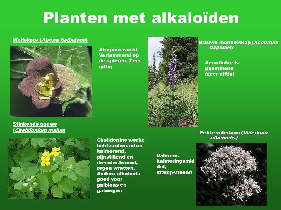 Planten met alkaloïden