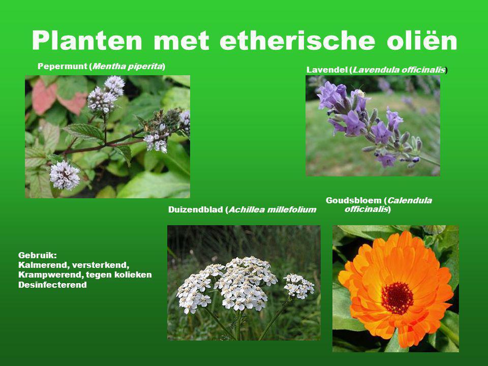 Planten met etherische oliën