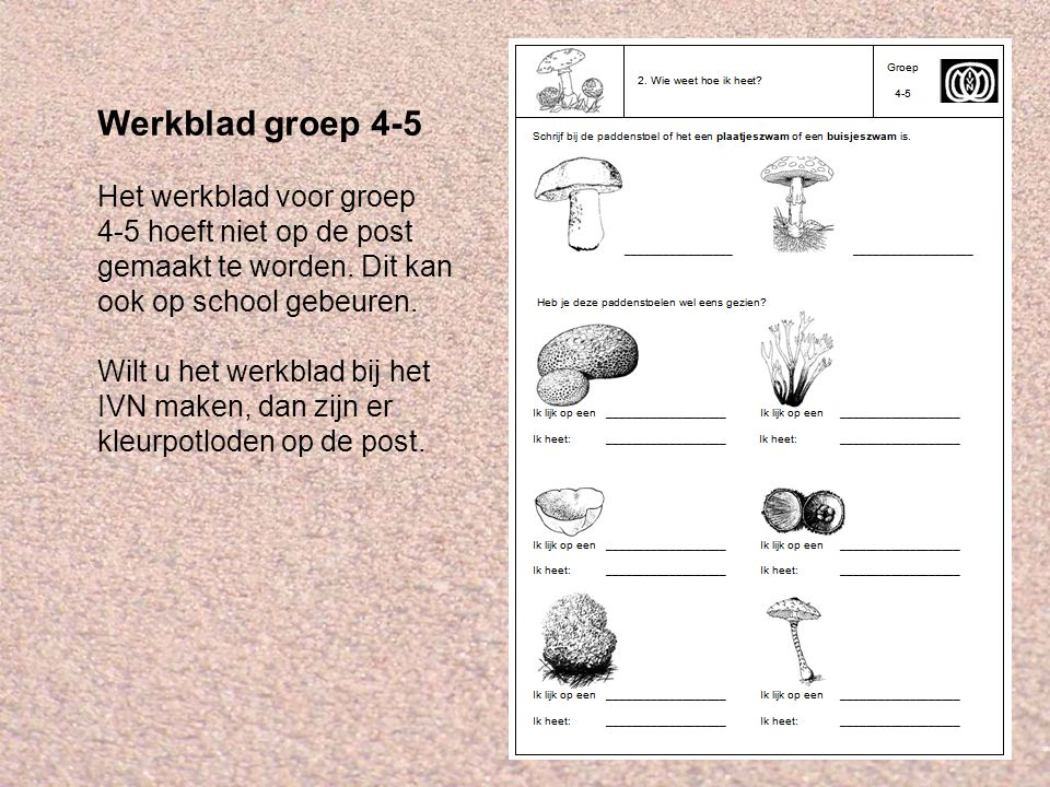 Werkblad groep 4-5