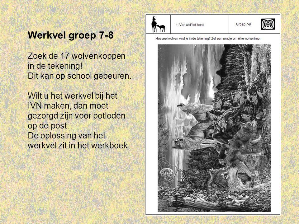 Werkvel groep 7-8 Zoek de 17 wolvenkoppen in de tekening!