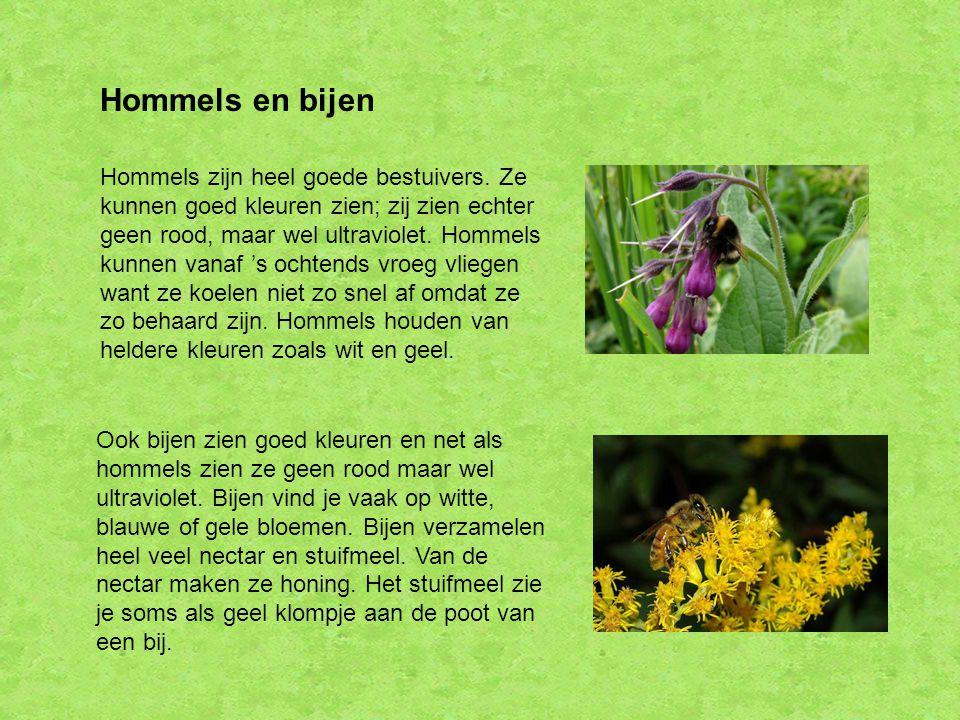 Hommels en bijen