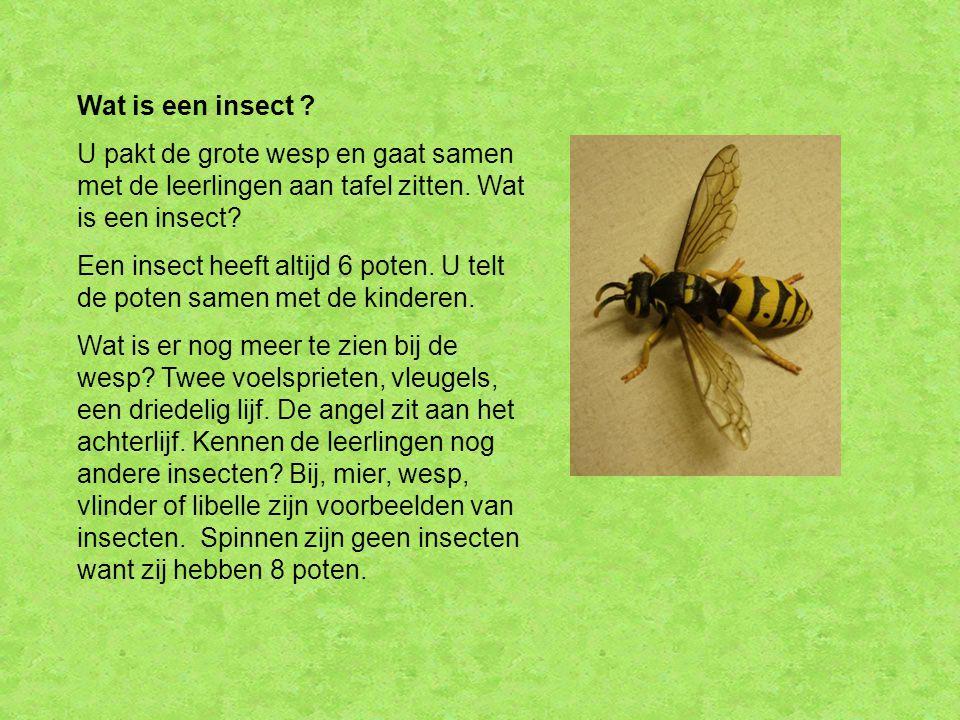 Wat is een insect U pakt de grote wesp en gaat samen met de leerlingen aan tafel zitten. Wat is een insect