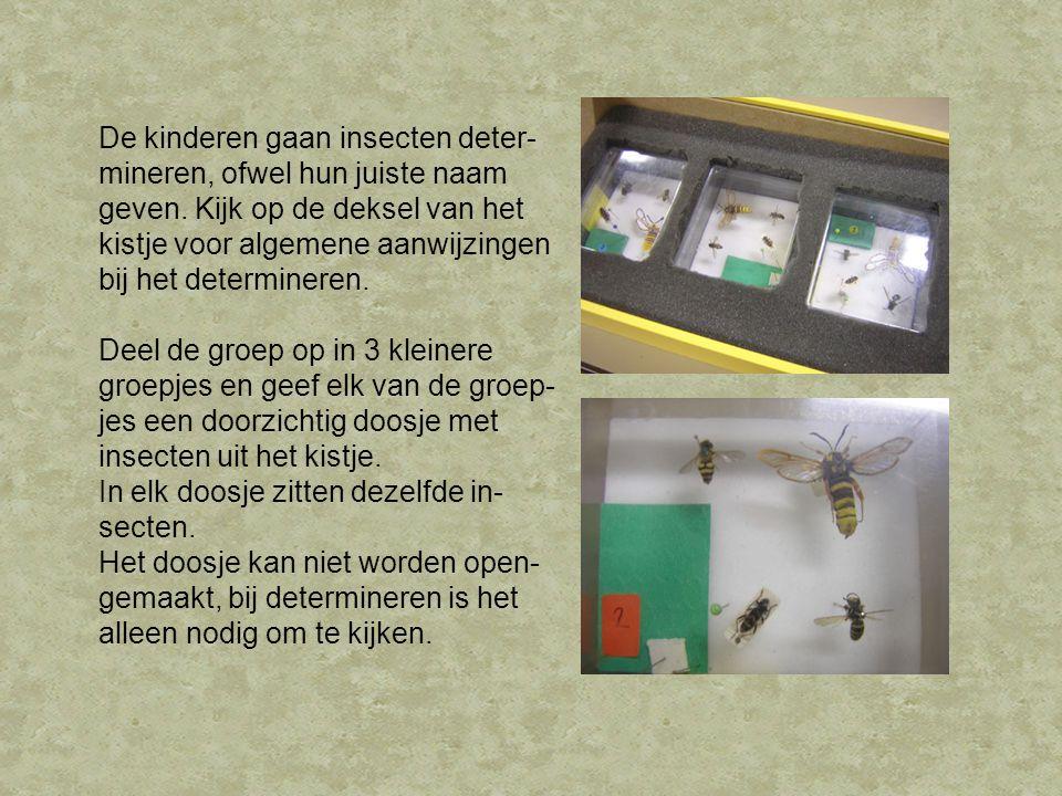 De kinderen gaan insecten deter- mineren, ofwel hun juiste naam geven