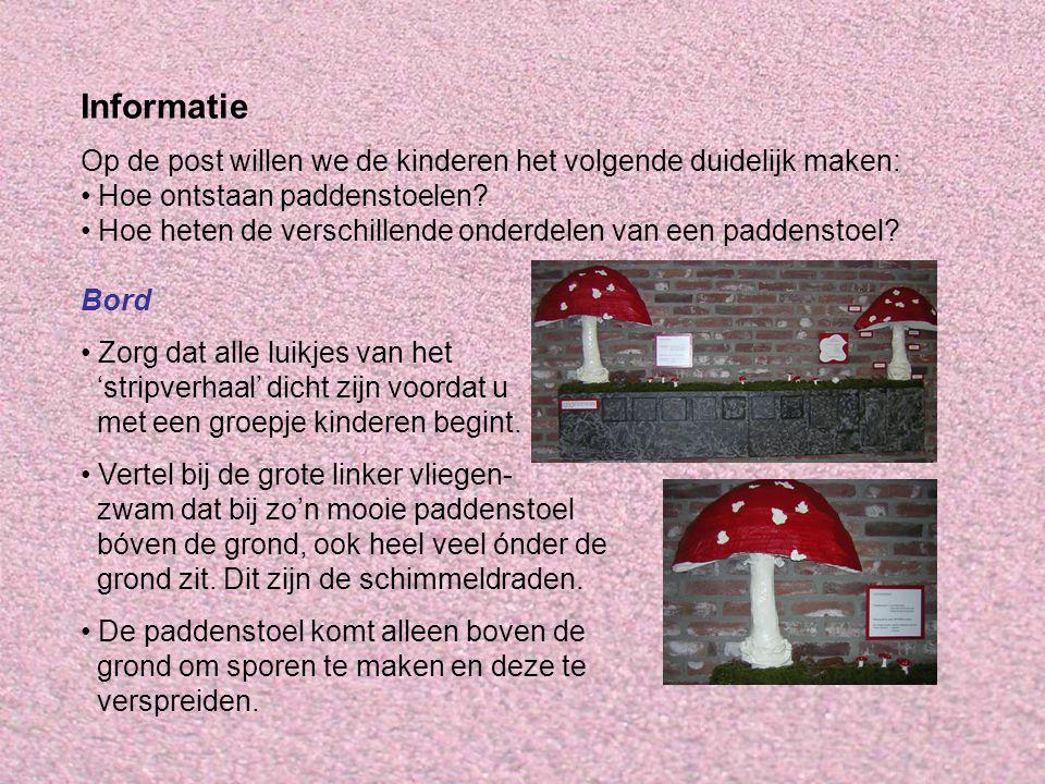 Informatie Op de post willen we de kinderen het volgende duidelijk maken: Hoe ontstaan paddenstoelen