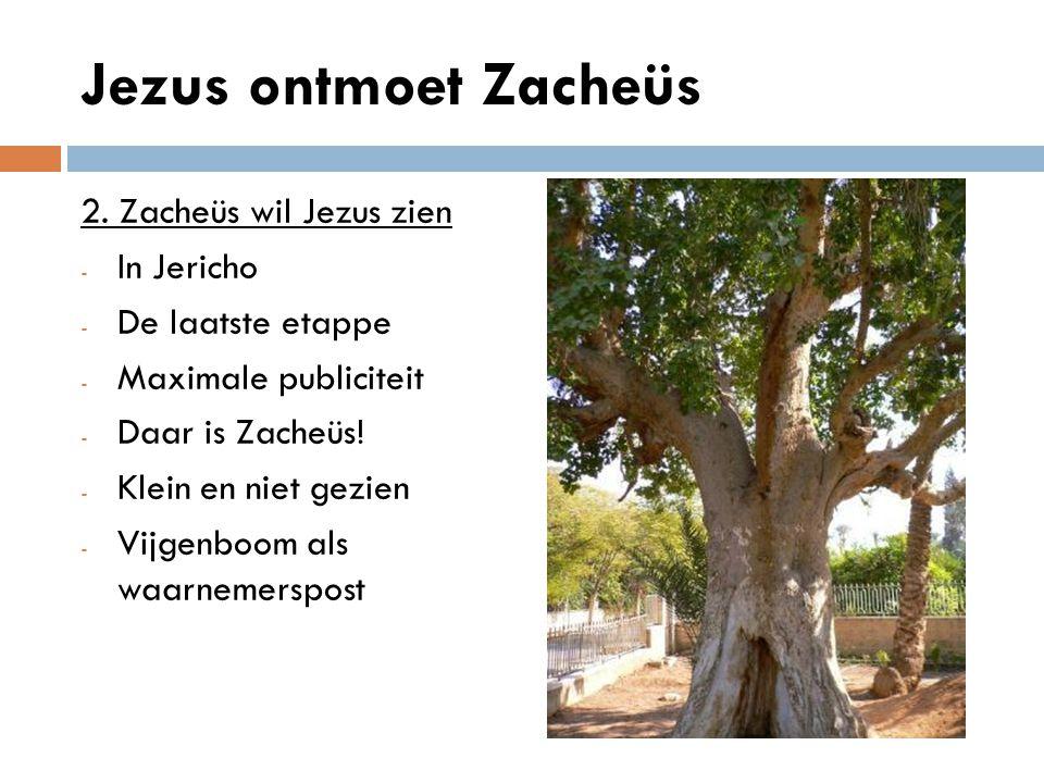 Jezus ontmoet Zacheüs 2. Zacheüs wil Jezus zien In Jericho