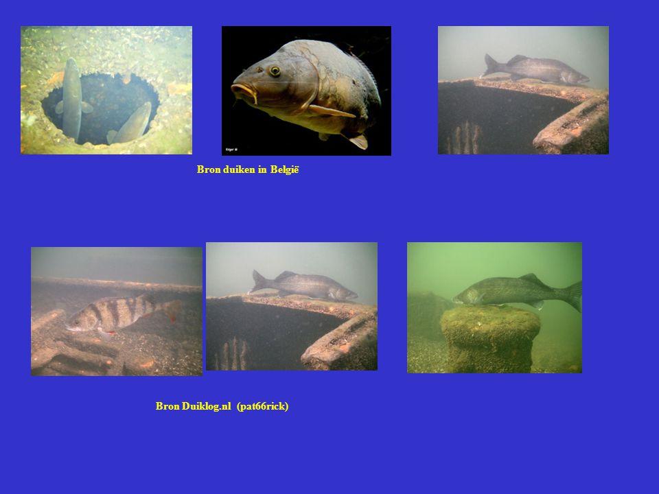Bron duiken in België Bron Duiklog.nl (pat66rick)