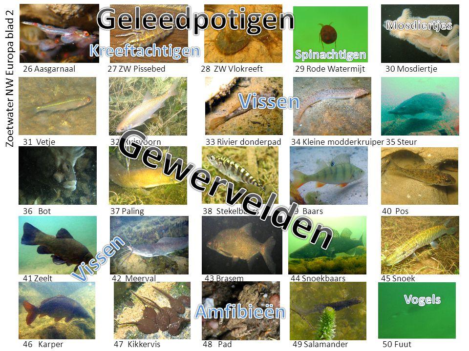Gewervelden Geleedpotigen Vissen Vissen Amfibieën Kreeftachtigen