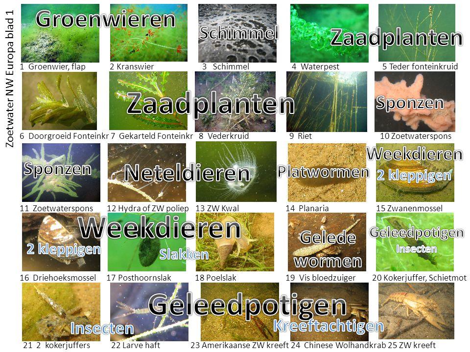 Zaadplanten Weekdieren Geleedpotigen