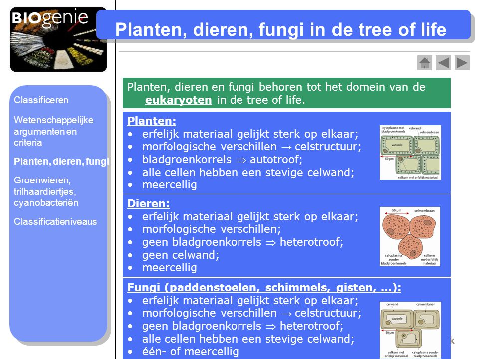 Planten, dieren, fungi in de tree of life