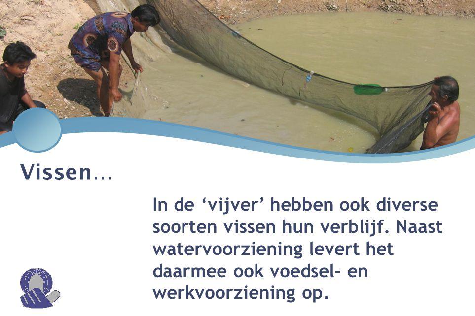Vissen… In de 'vijver' hebben ook diverse soorten vissen hun verblijf.