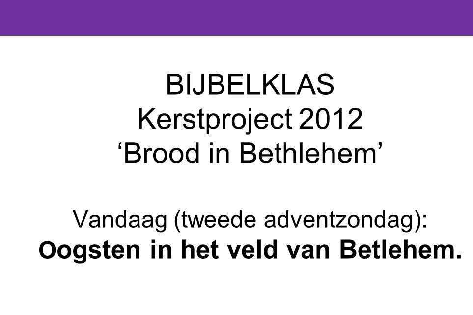 BIJBELKLAS Kerstproject 2012 'Brood in Bethlehem' Vandaag (tweede adventzondag): Oogsten in het veld van Betlehem.